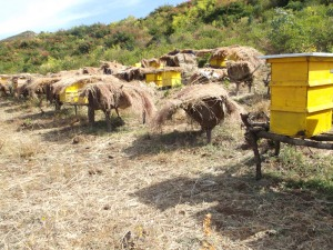 apiary landless group
